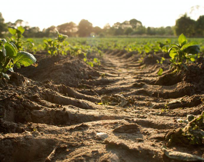 talaj zöld növényekkel